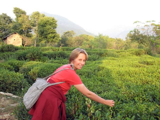 А вокруг Бира - чайные плантации