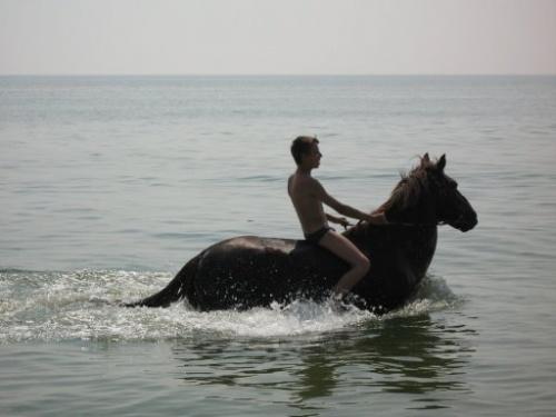 морской конь.