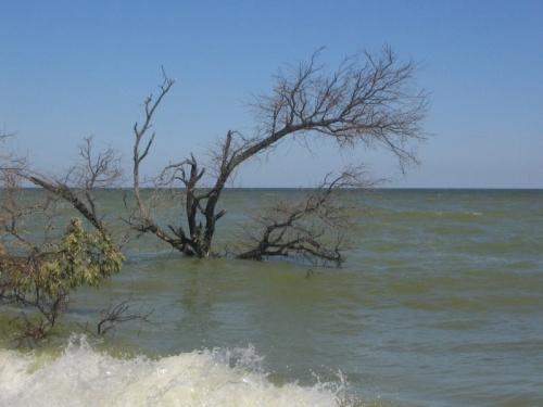 дерево купаться пошло