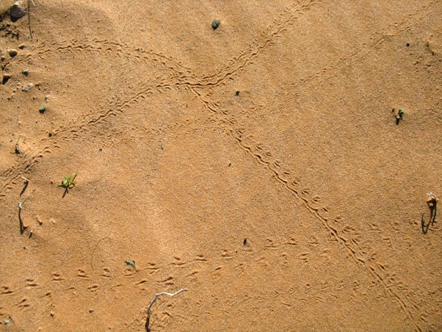 Маршруты. Пустыня Гоби, Монголия