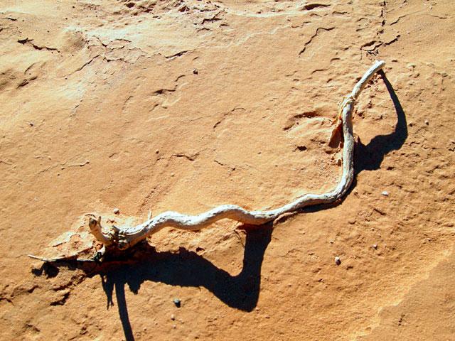 Графика пустыни. Баянзаг, Монголия