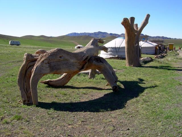 Куски древних деревьев у пропускного пункта на территорию заповедника