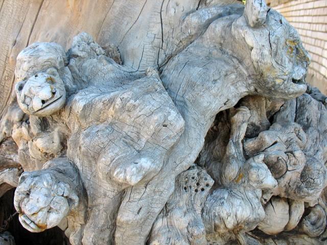 Вот такие морды можно увидеть в куске дерева