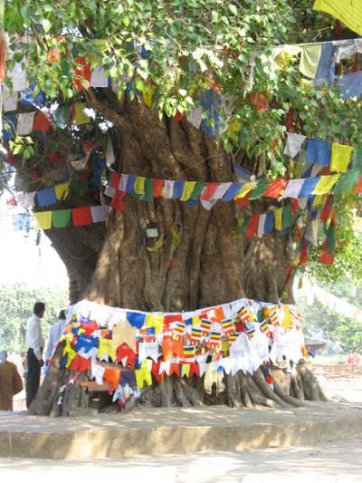 Дерево Будды