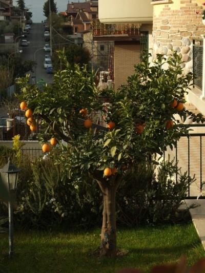 мандарины на улице