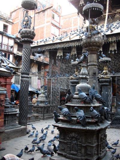 Голубиный храм, Катманду
