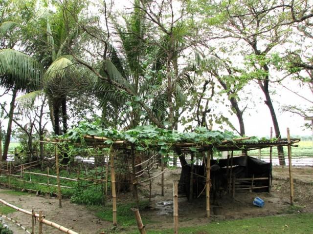 Сурабхи-кунджа 2
