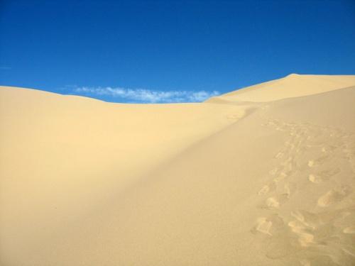 В песках Хонгорын Элс