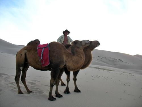 Бембо – повелитель верблюдов