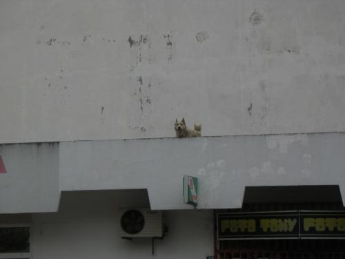 Местный дозор с крыши магазина