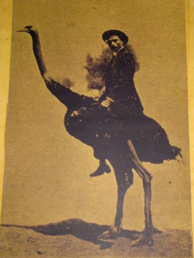 Индустриалист на страусе