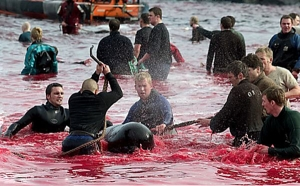 Stop Killing The Dolphins