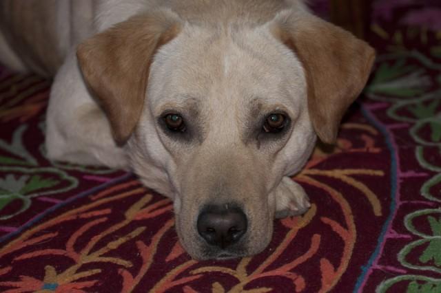 этот щен приходил к нам как по часам каждый день в течении месяца, а потом пропал(