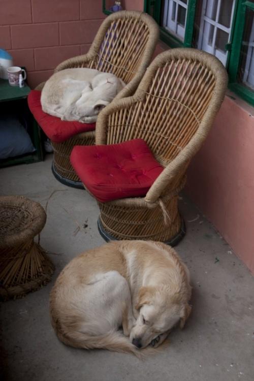 также они были не прочь поваляться на наших креслах