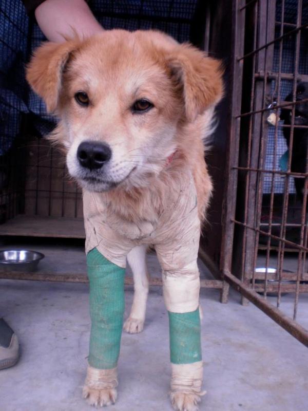 Street Dog Care - На Боуде, Ктм.