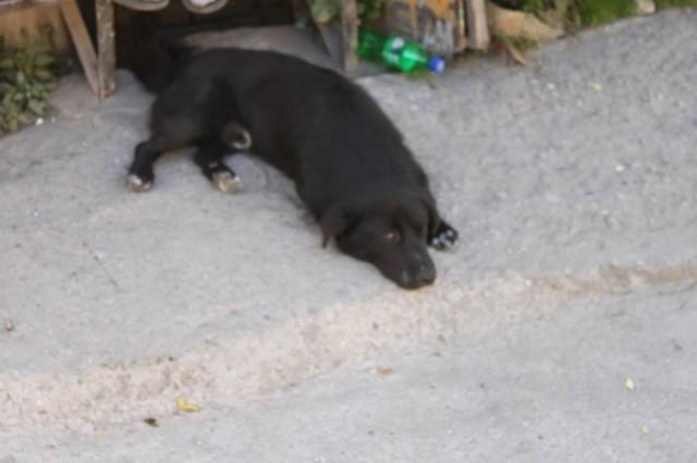 Грустный пес из Васишта