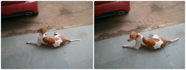 Собаки - экстраверты любят кабриолеты