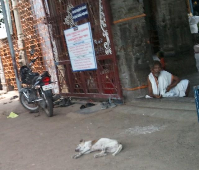 Собаки - экстраверты любят сон в открытых позах