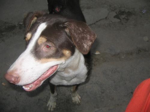 утренняя собака из Мажну-ка-Тиллы