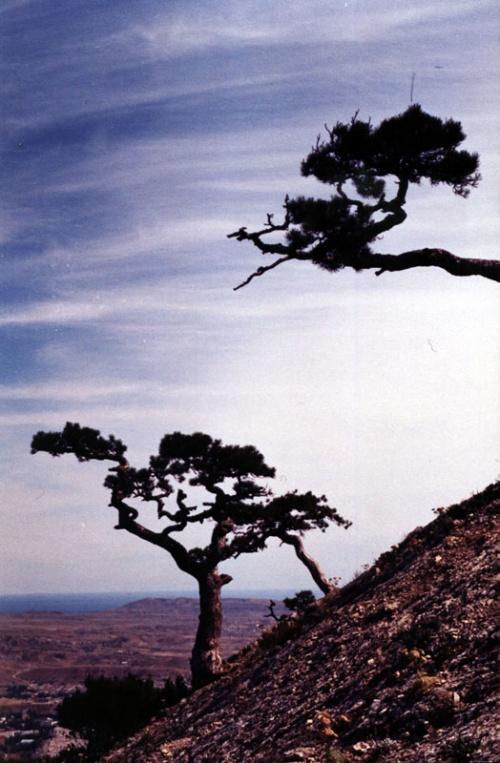 Другая сторона Сокола, по которой можно вскарабкаться наверх. Это там деревья так растут.