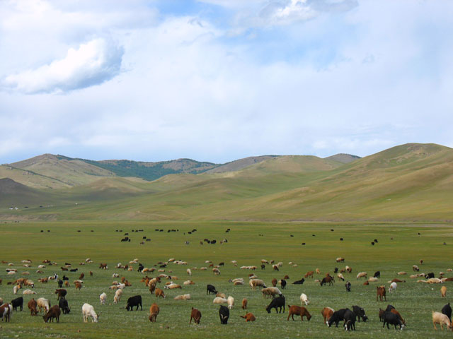 Тучные стада. Монголия