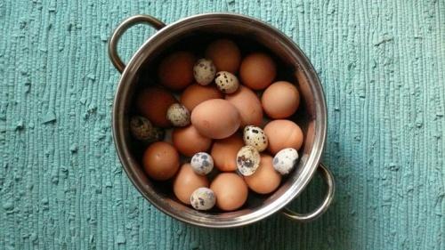 1. Варим Яйцы.