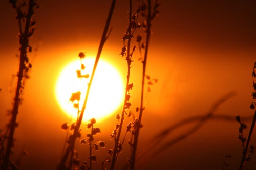 Солнечная степь