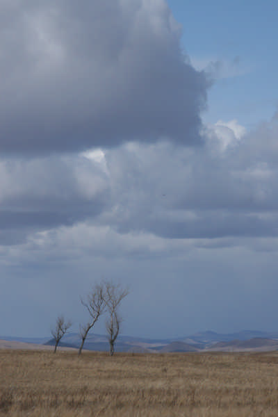 В пцстынных степях хакасской земли три горды ветки зачем-то росли...