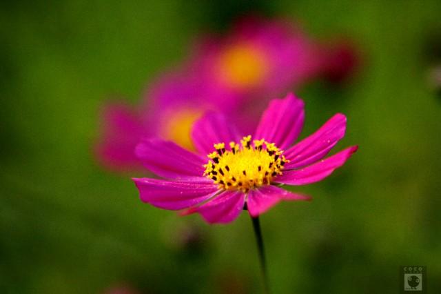 Флоридыны цветы 3.