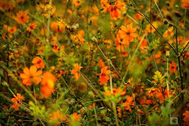 Флоридыны цветы 4.