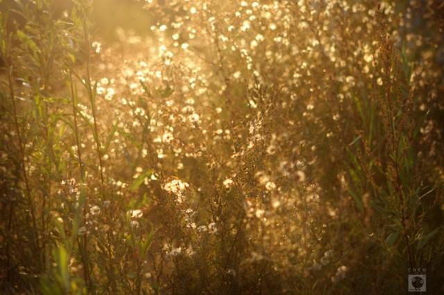 Флоридыны цветы .
