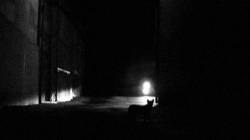 ... а потом Заяц сказал что вернется, а ночью коты черные, а не серые.