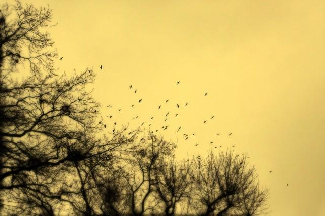 ................птички... ...........