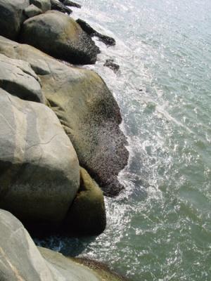 риф обросший ракушками