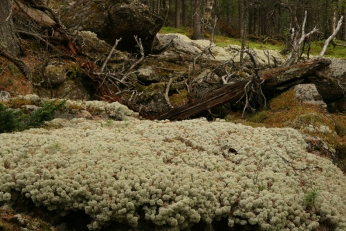 Дорога: то мох, то коряги, то камни