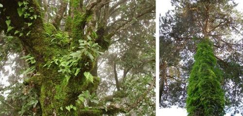 У нас и у них всякая растительная экзотика (кстати, догадайтесь, какая фотка индийская, а какая белорусская?)