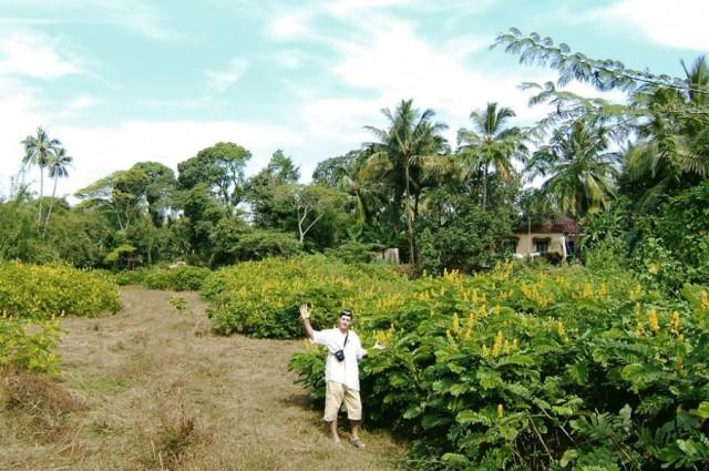 Я в Индии в растительности