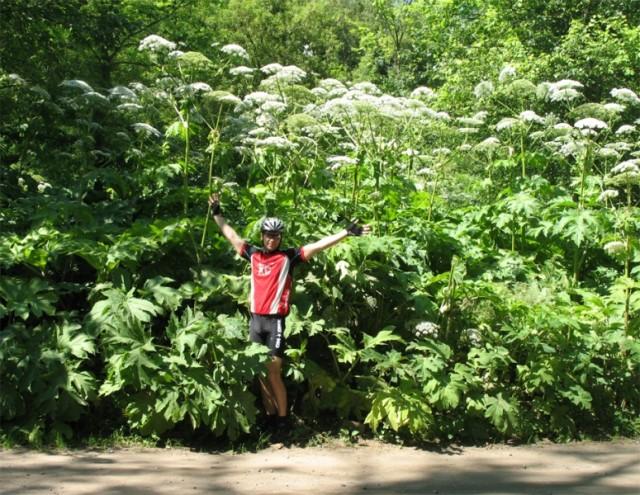 Я в 5 минутах от дома в неизвестной мне однолетней цветущей растительности высотой под 4 метра