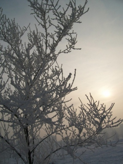 Зимняя одежда у деревьев