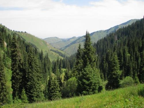 Чем мне нравятся горы около Алма-Аты - они поросшие лесом. В отличе от Бишкека, к примеру