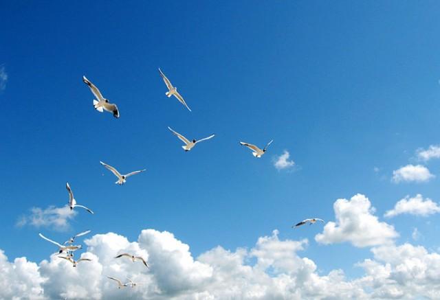 в синем небе