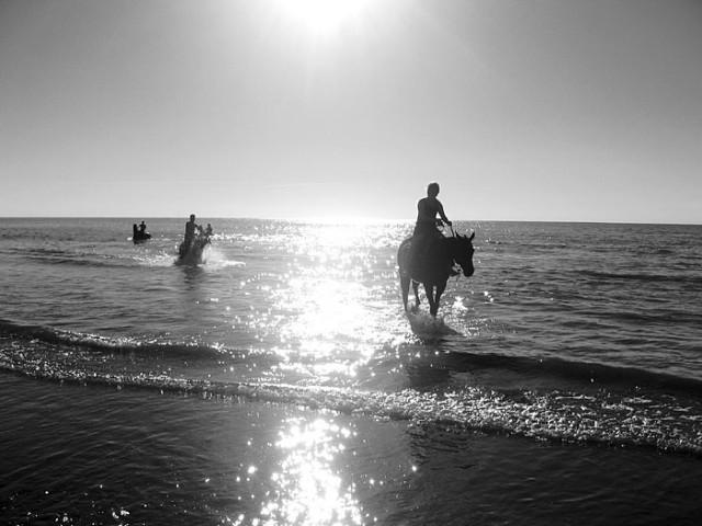 выходят лошади.