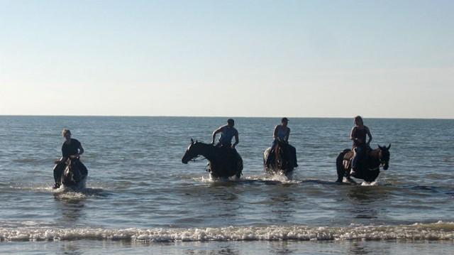 морские лошади