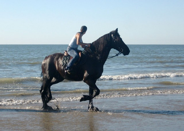 еще одна морская лошадка