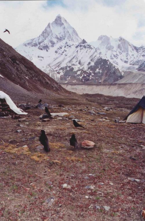 Ну очень наглые и прожорливые птички.по бокам палатка-жилье и землянка-кухня.На заднем плане вид на долину Нандован