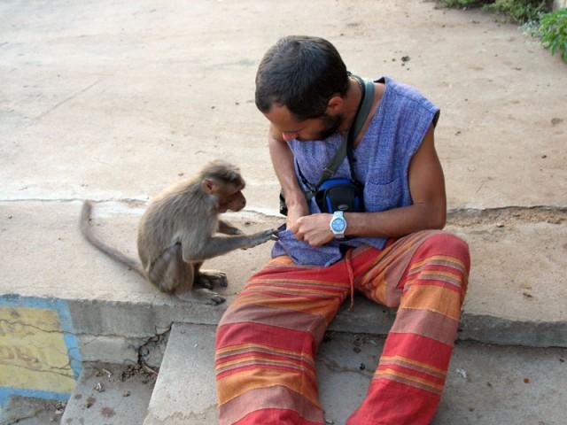 Мартышон заглядывает ко мне в карман в деревне Ахобилам в штате Андхра-прадеш, Индия