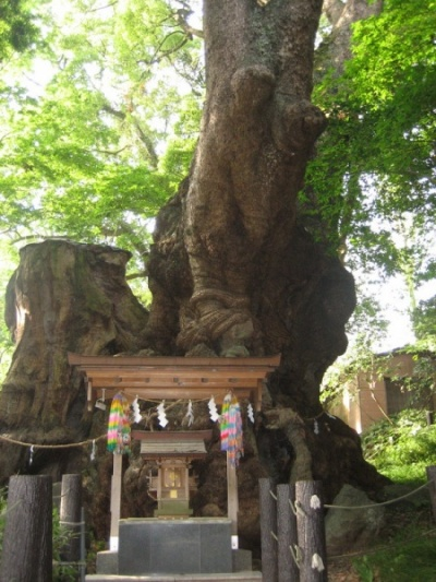священное дерево - этому говорят 2000 лет!!!