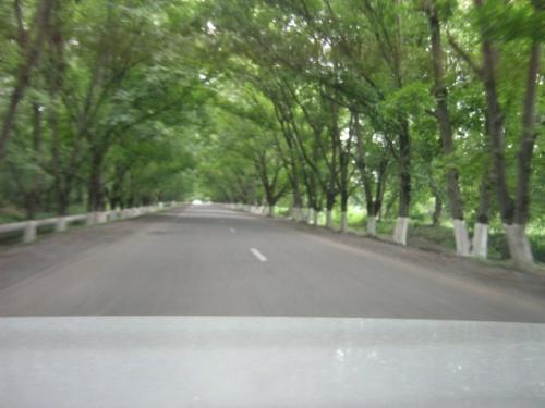 зеленая аллея в горы