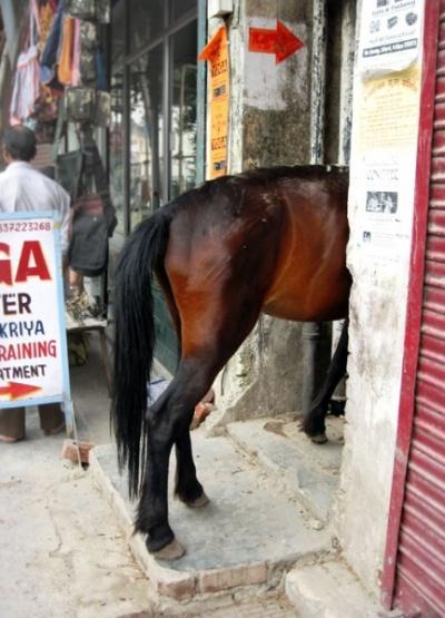 Половина лошади, в Ришикеше :)
