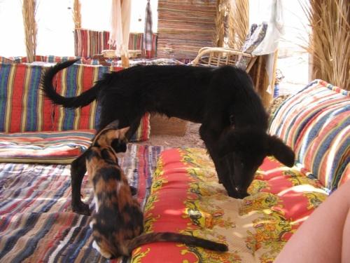 Симба и Нэнси(кошака)